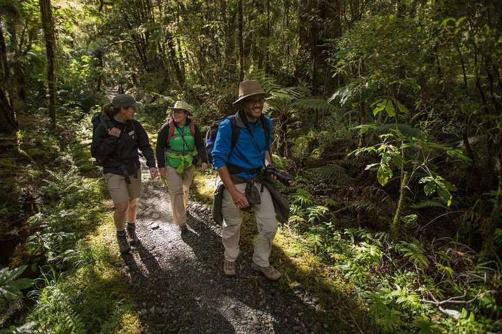 Half-Day Milford Track Guided Hiking Tour, Fiordland y Milford Sound, New Zealand