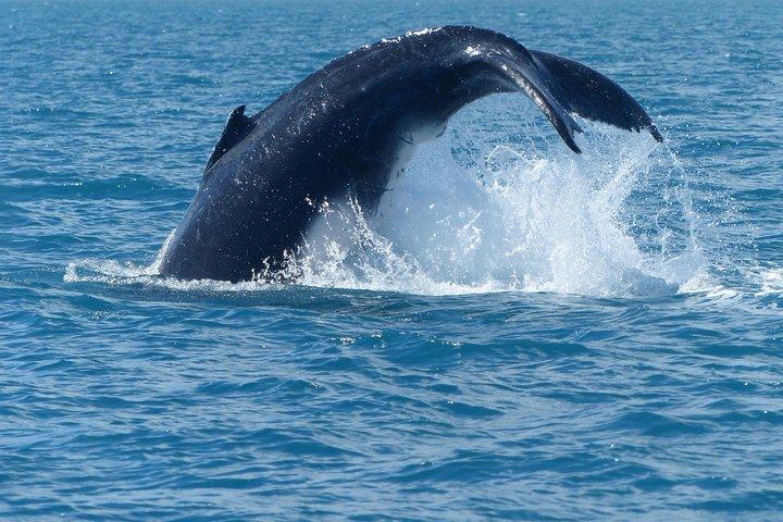 Spirit of Hervey Bay Whale Watching Cruise, Hervey Bay, Austrália