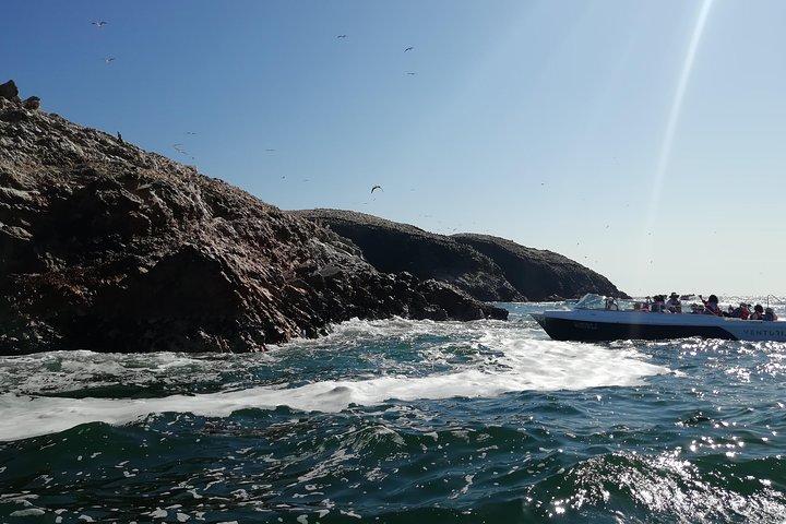 Ballestas Islands, Tacama Vineyard & Huacachina Oasis Private Tour from Lima, Lima, PERU