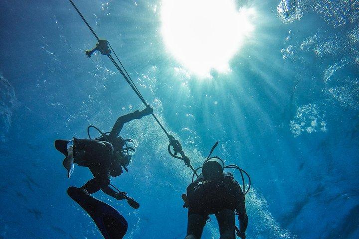 Full-Day Catalina Island Scuba Diving Tour from La Romana, ,