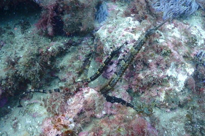 Sesimbra Dive Discovery, Distrito de Setubal, PORTUGAL
