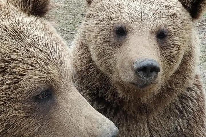 Private Tour: Bears Sanctuary, Bran Castle & Peles Castle Hotel Pickup/ Drop off, Brasov, RUMANIA