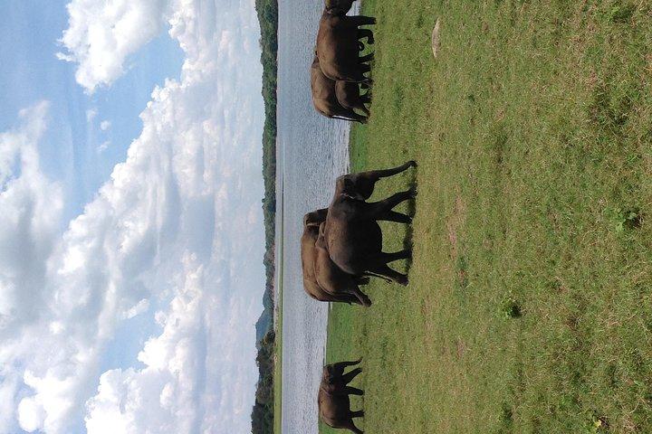Day Tour from Colombo to Sigiriya, Pidurangala Rock & National park safari, Sigiriya, SRI LANKA