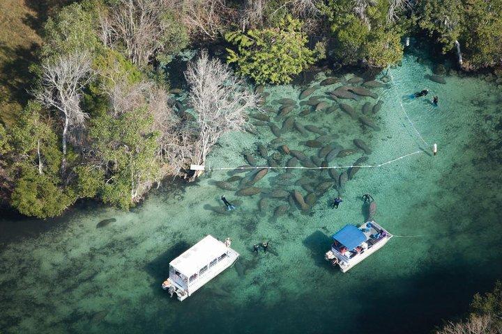 Swim with Manatees Adventure, Crystal River, FL, ESTADOS UNIDOS