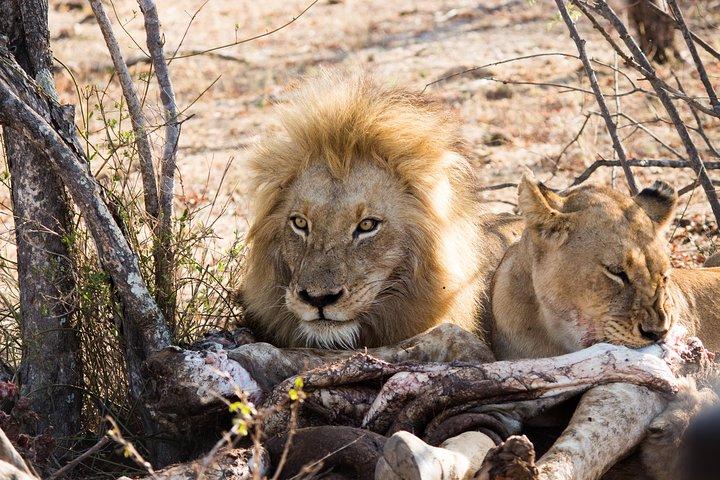 3 Day Classic Kruger National Park Safari, Johannesburgo, South Africa