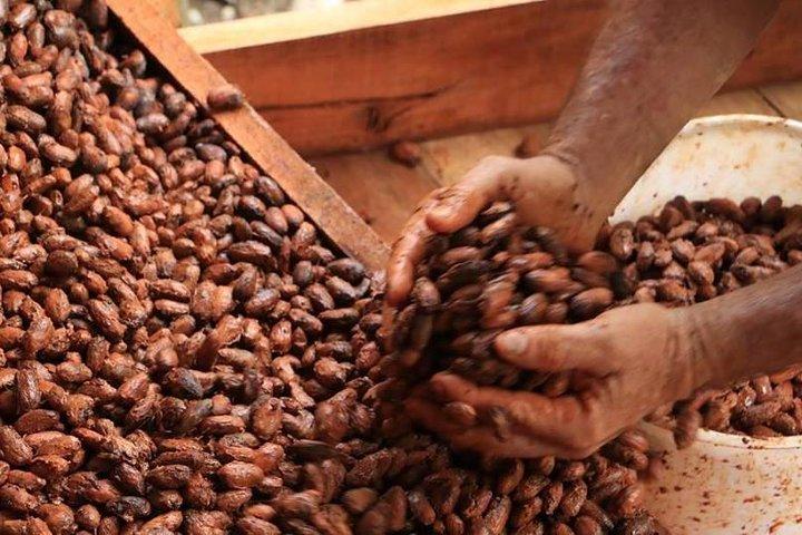 Eden Chocolate Tour - The best chocolate tour in La Fortuna, ,