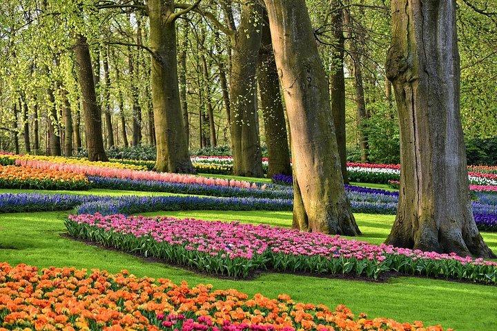 Private Keukenhof Gardens and Tulip Fields Tour from Zaandam, Zaandam, HOLANDA