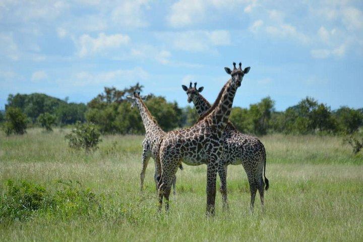 3 Days 2 Nights Mikumi National Park from Dar es salaam road trip, Dar es Salaam, Tanzânia