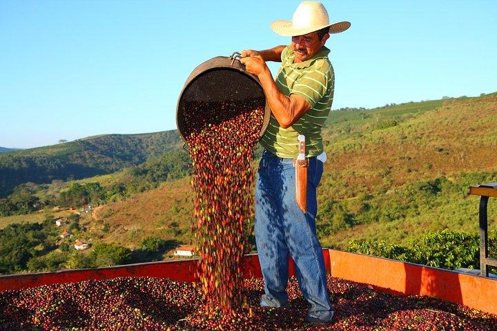 Visit to an Original Historic Coffee Farm Guided Tour including Transfer, Rio de Janeiro, BRASIL