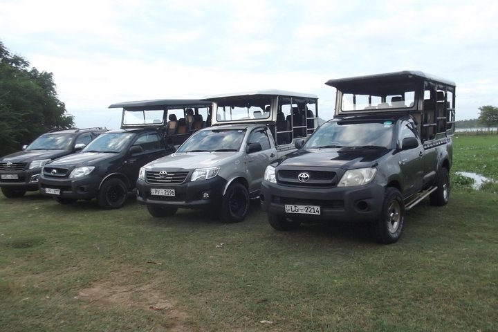 Special leopard safari in Yala National park - 04.00 am to 11.30 am, ,