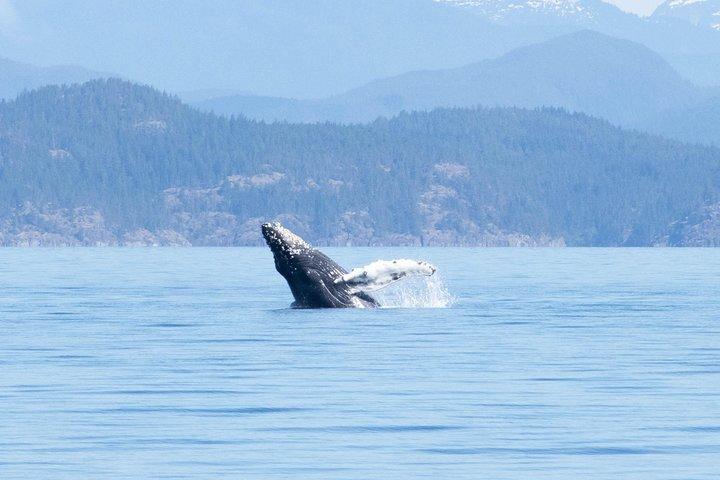 Coastal Adventure (Afternoon), Isla de Vancouver, CANADA