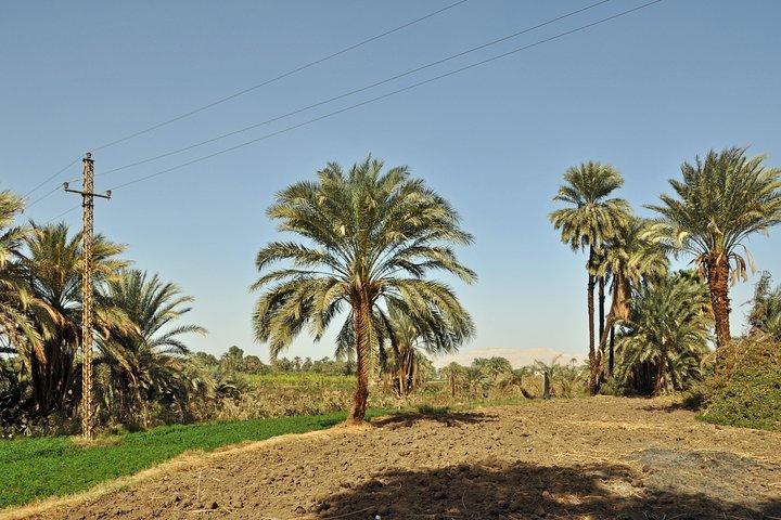 Cooking In Egyptian village, El Cairo, EGIPTO