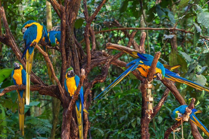 Iguaçu - Parque de las Aves, Puerto Iguazú, ARGENTINA