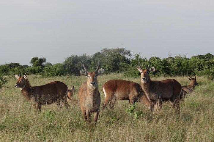 3 Days Queen Elizabeth national Park Safari Holiday, ,