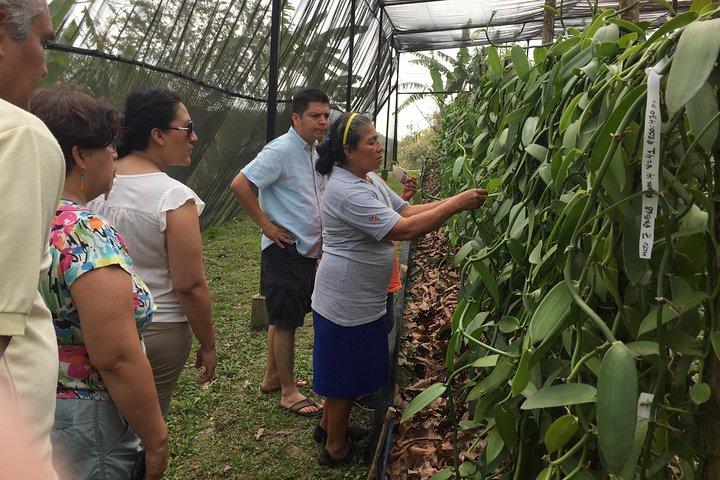 Tajin Ruins Day Trip and Vanilla Factory Experience, Veracruz, MÉXICO