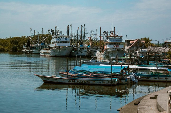 Day Trip: Mangroves, Cocoa Plantation & Dolphins (Departure from Guayaquil), Guayaquil, ECUADOR