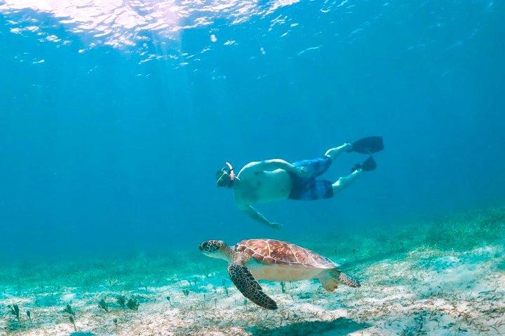 Culebra Island Kayak & Snorkel with Turtles Adventure - Ferry Tickets Included!, ,