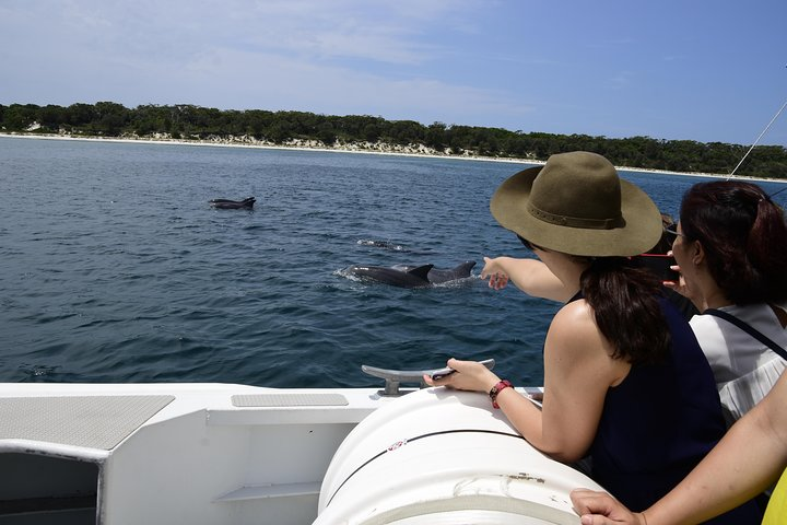 Jervis Bay Dolphin Cruise, Jervis Bay, Austrália
