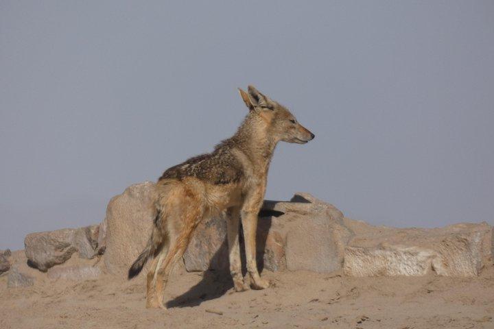 Swakopmund Cape Cross seal colony Day Tours, Swakopmund, NAMIBIA