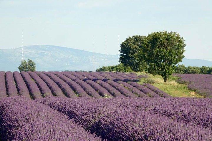 Lavender, Marsella, FRANCIA