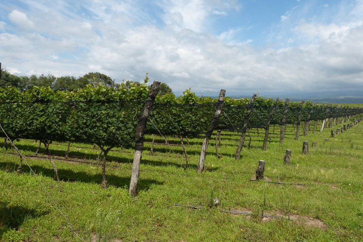 Calamuchita WineTour x 2 Pax, Cordoba, ARGENTINA