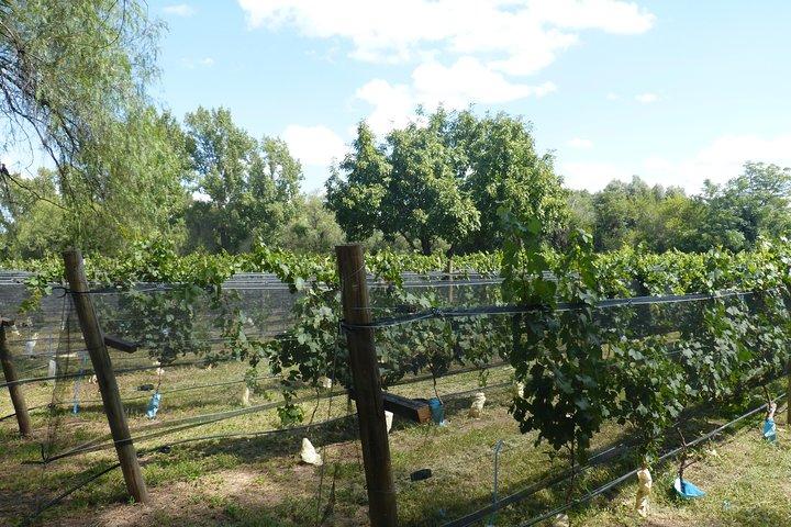 Traslasierra WineTour x 2 Pax, Cordoba, ARGENTINA