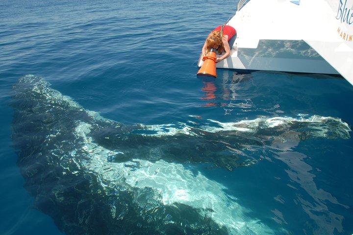 Fraser Island Whale Watch Encounter, Fraser Island, Austrália