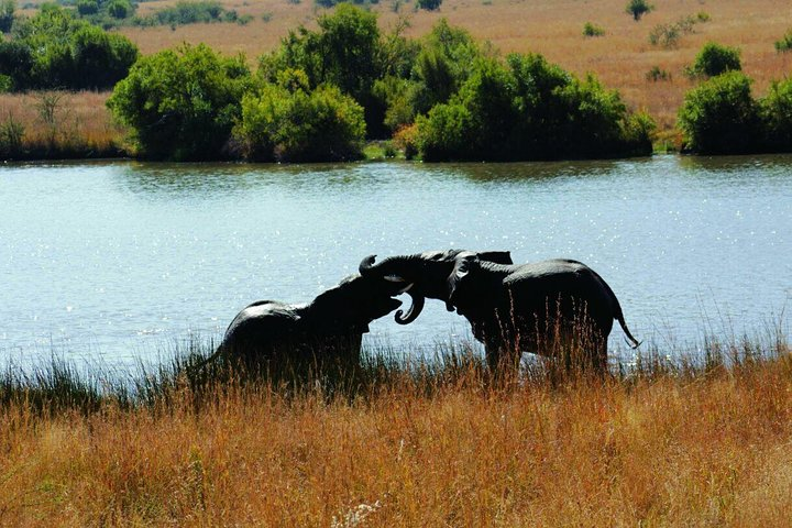 Safari ecológico en Pilanesbserg con todo incluido desde Johannesburgo, ,