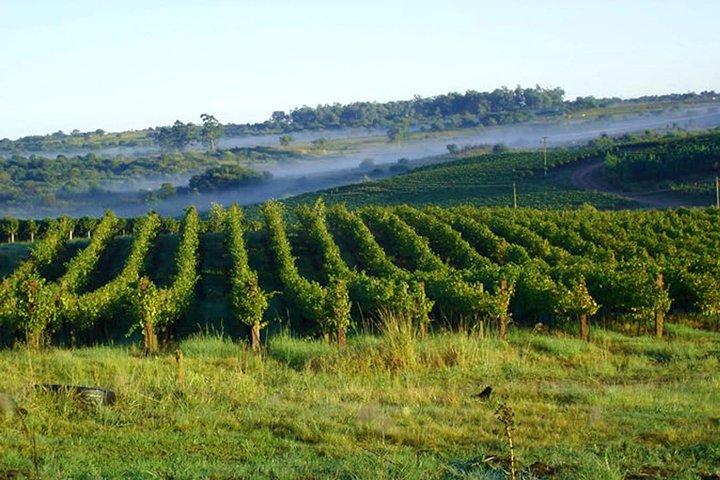 Wineries of the South, Maria Fumaça Train and Italian Epic Park, Gramado, BRASIL