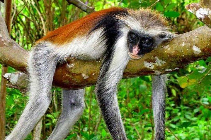 Jozani Forest Wild Tour, ,