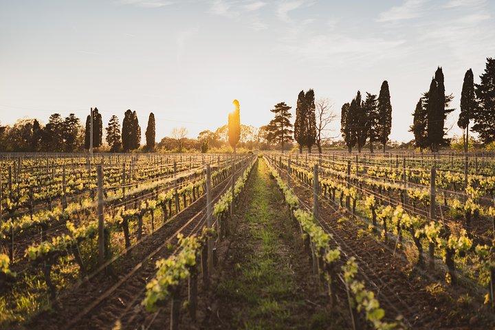 Supertuscan wine day tour from Livorno, Lucca, Pisa or Piombino, Livorno, ITALIA