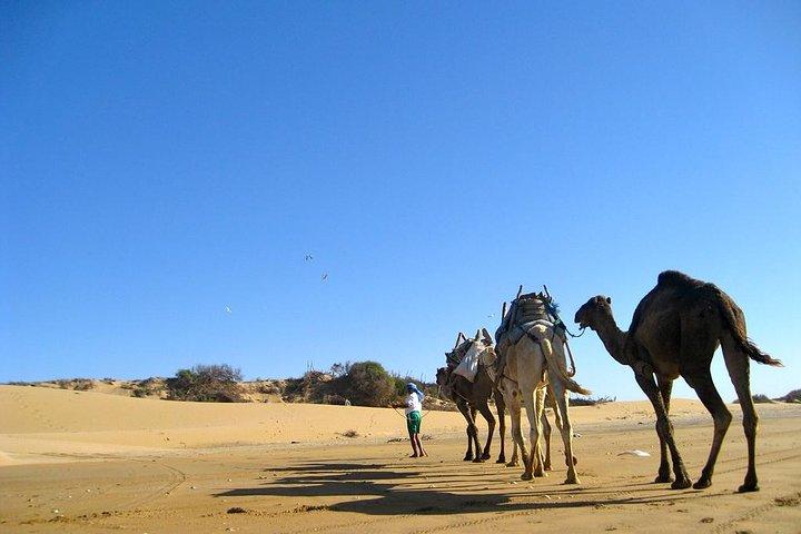 Camel Ride on the Beach of Essaouira, Esauira, MARROCOS