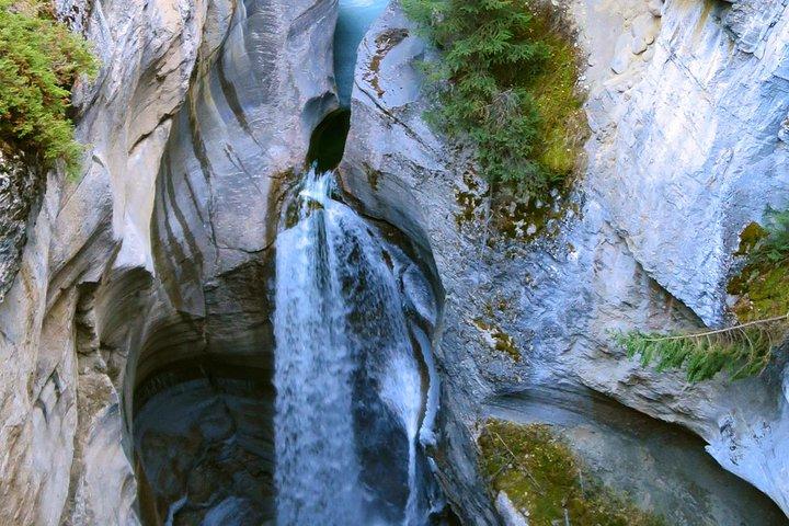 Jasper Wildlife and Waterfalls Tour with Maligne Lake Hike, Jasper, CANADA