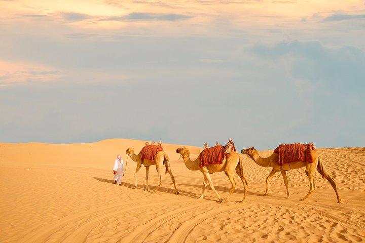 Half-Day Desert Safari from Abu Dhabi, Abu Dabi, EMIRATOS ARABES UNIDOS