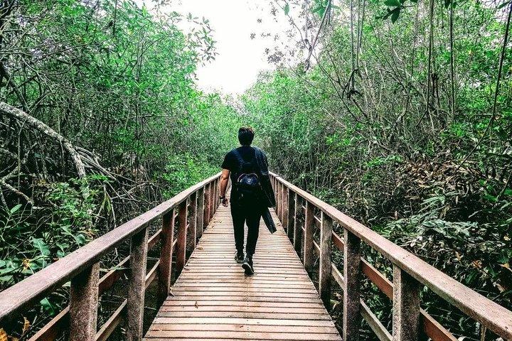 Ecological Reserve Churute Mangrove and Cocoa Farm, Guayaquil, ECUADOR