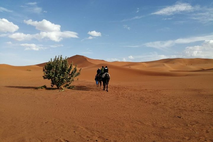 Overnight Small-Group Desert Tour from Fez with Camel Ride and Desert Camp, Fez, MARRUECOS
