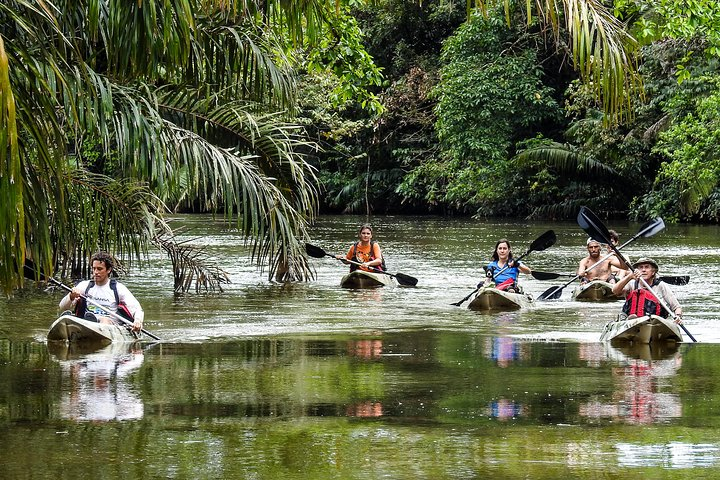 Kayaking a Quiet River in the Most Bio-Diverse Area of Costa Rica, Puerto Jimenez, COSTA RICA