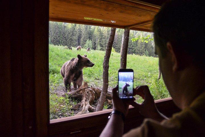 Day Trip & Bear Watching in the Land of Volcanoes, Brasov, RUMANIA