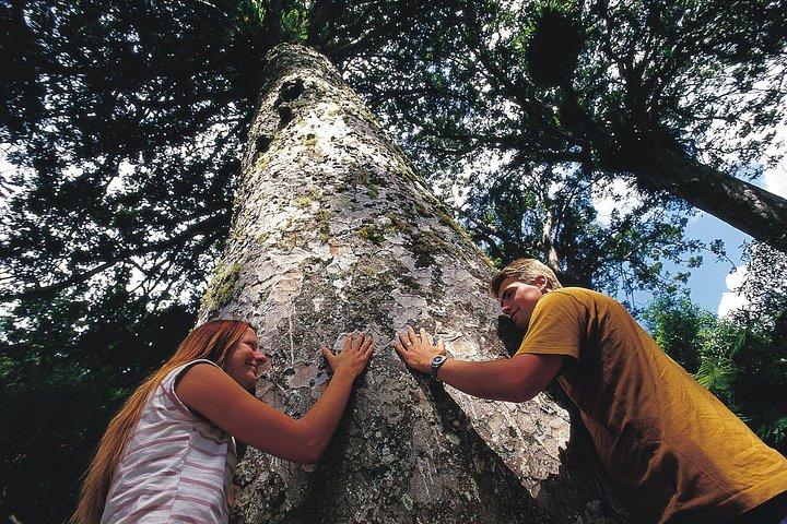 Excursión de un día para grupos pequeños por Península Coromandel desde Auckland que, Auckland, NUEVA ZELANDIA