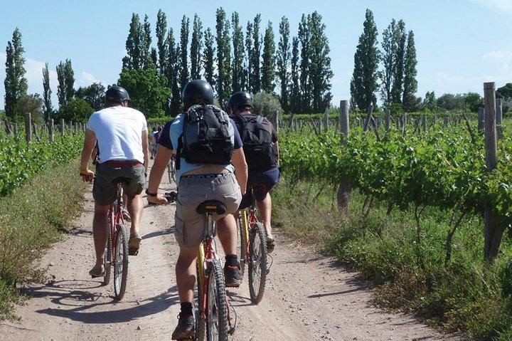 Bike por Bodegas y Viñedos - Mendoza, Mendoza, ARGENTINA