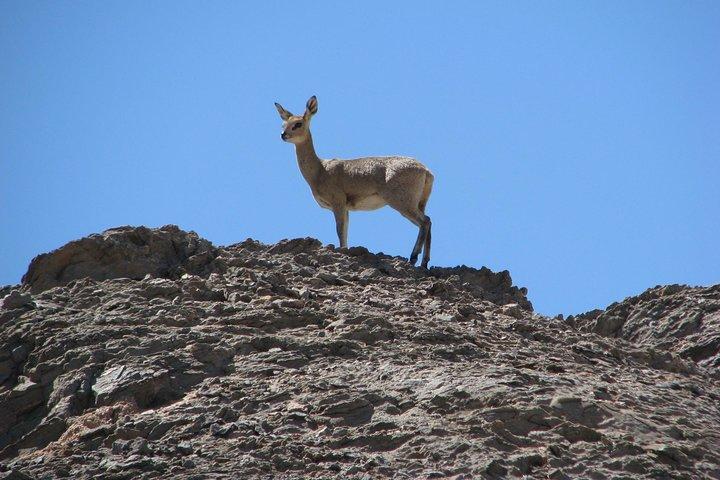 Spitzkoppe - Day Tour to the Spitzkoppe Mountain from Swakopmund, Swakopmund, NAMIBIA