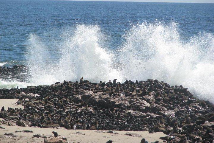 Cape Cross Seal Colony Tour from Swakopmund, Namibia, Swakopmund, NAMIBIA