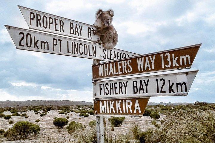 One Day Port Lincoln Tour - Tasting Eyre, Port Lincoln, Austrália