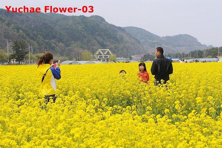The Beauty of the Korea Cherry Blossom Discover 9days 8nights, Incheon, COREA DEL SUR
