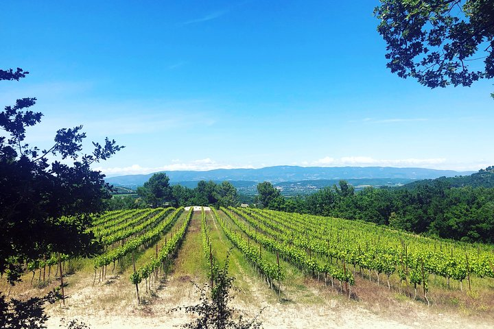Provence wine tour of vineyards & the best foods & wine of Provence private tour, Marsella, FRANCIA