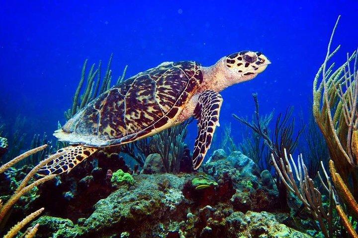 All inclusive Culebra Snorkeling Trip Sea Venture (9-3pm tour)(Check in 8am), ,