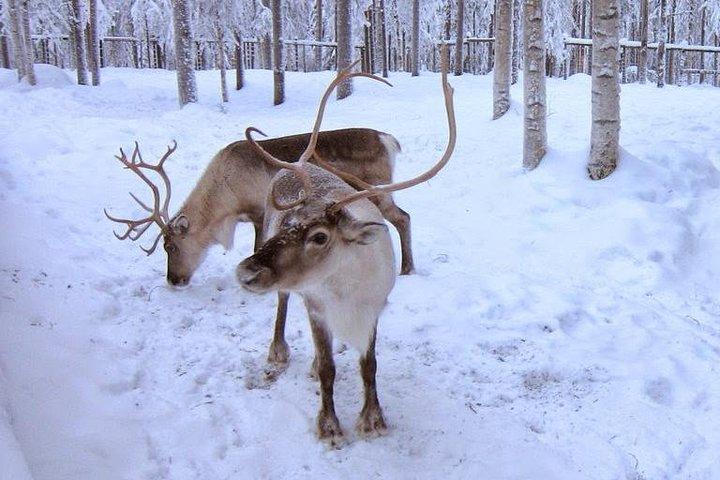 Trip to Ranua Wildlife Park (Ranua Zoo), Rovaniemi, FINLANDIA