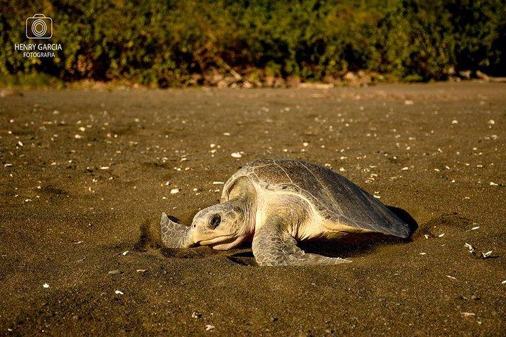 Turtle Nesting Tour, ,