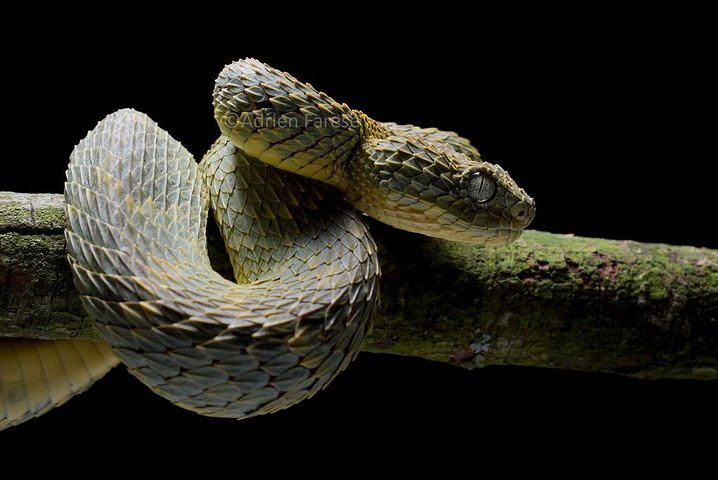 Reptiles And Snakes Park, Cataratas Victoria, Zimbabwe