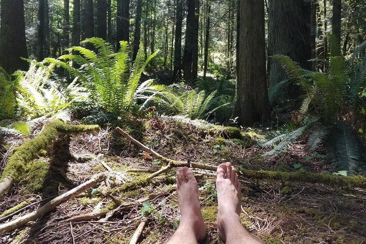 Mystical Rainforest Tour: Forest Bathing & Nature Mysticism, Isla de Vancouver, CANADA
